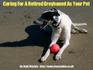 Thumbnail Caring For A Retired Greyhound As Your Pet